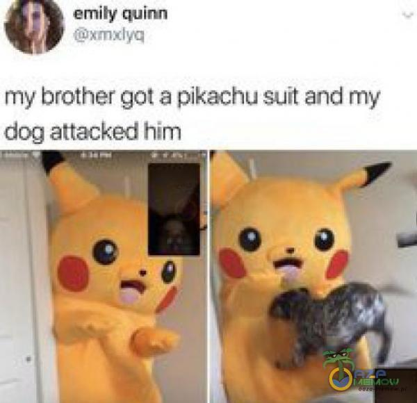 emity quim xmxlyq my brother got a pikachu suit and my dog attacked him