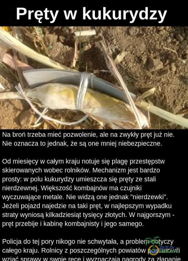 Pręty w kukurydzy Na broń trzeba mieć pozwolenie, ale na zwykły pręt już nie. Nie oznacza to jednak, że są one mniej niebezpieczne. Od miesięcy w całym kraju notuje się agę przestępstw skierowanych wobec rolników. Mechanizm jest bardzo...