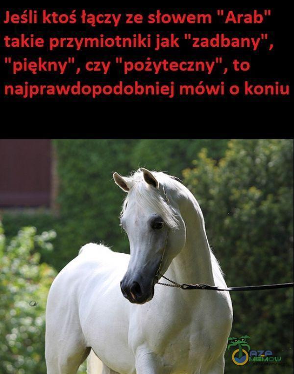"""Jeśli ktoś łączy ze słowem Arab takie przymiotniki jak zadbany"""", piękny , czy pożyteczny , to najprawdopodobniej mówi o koniu"""