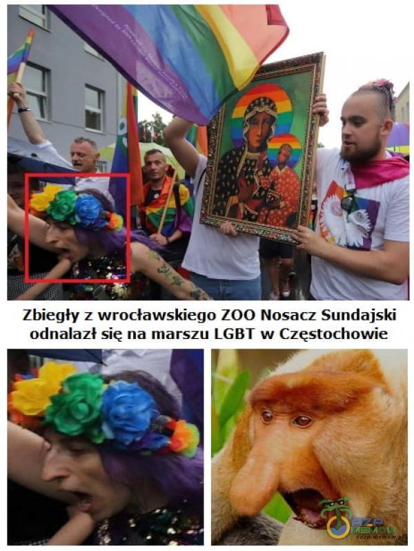 Zbiegły z wrocławskiego Z0O Nosacz Suńdajski adnalazł się na marszu LG8T w Częstachowie