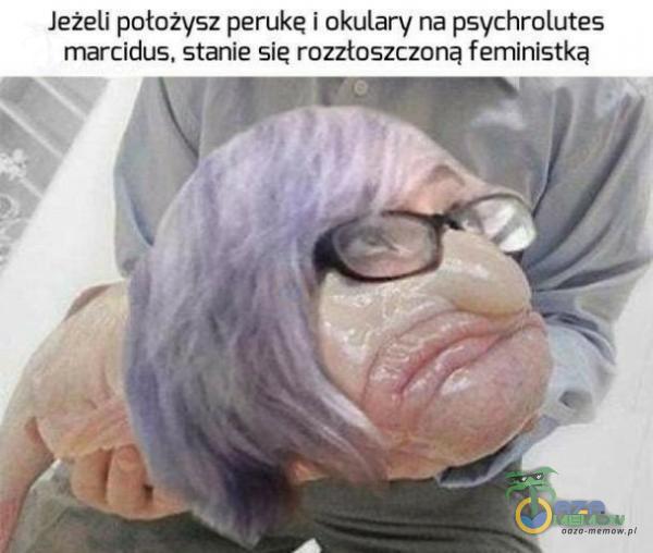 leżeli położysz perukę i okulary na psychrolutes marcidus, stanie się rozztószczońą feministką AF