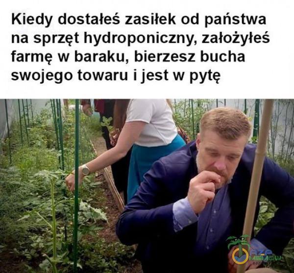 Kiedy dostałeś zasiłek od państwa na sprzęt hydroponiczny, założyłeś farmę w baraku, bierzesz bucha swojego towaru i jest w pytę