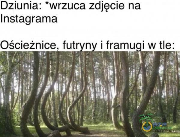 """Dziunia: *wrzuca zdjęcie na Instagrama : _ I   WJH : . .: ! :qu : """": 1%]: ~ ›: : .:.-~ :...-. r: """"%:— ML(1;—_-AH-k.ł !* Oście_żnlice. fut n( iframuiwtlel : :*:l :"""