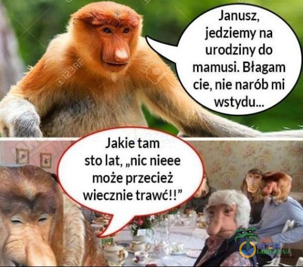 """77 Janusz, A jedziemy na urodzjny da mamusi. Błagam 4 cie, nie narób mi Jakie tam sto lat, """"nicnieee może przecież wiecznie trawe!"""""""