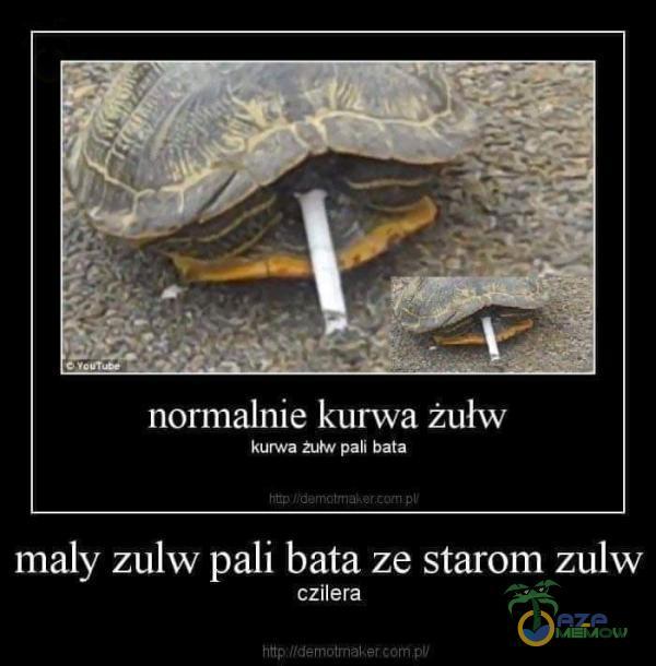 normalnie k***a żułw k***a pali bata f mały zulw pali bata ze starom zulw czilera 4ł