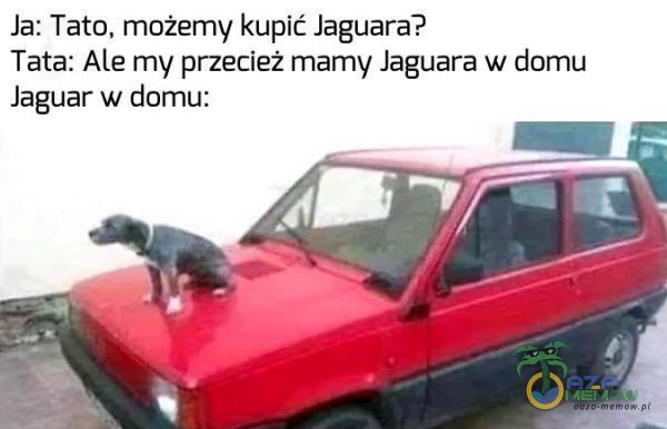 Ja: Tato, możemy kupić Jaguara? Tata: Alte my przecież mamy Jaguara w domu Jaguar w domu:
