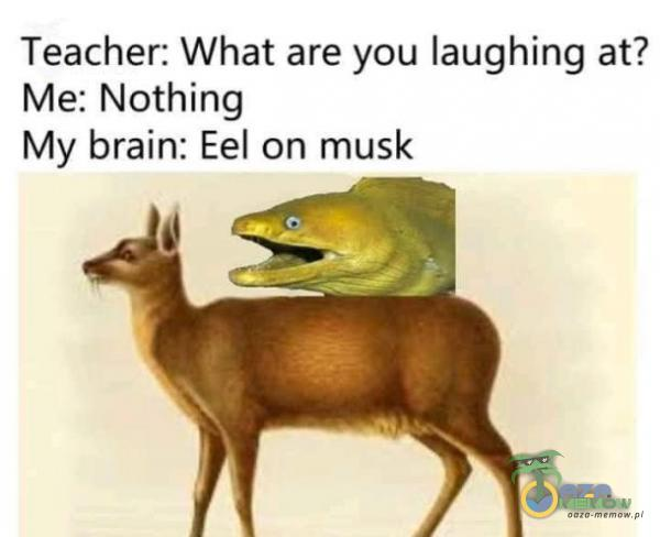 Teacher: What are you laughing at? Me: Nothing My brain: Eel on musk