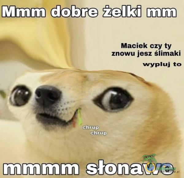 nn Maciek czy ty znowu jesz ślimaki wyuj to mm mm sșłąnąw,e