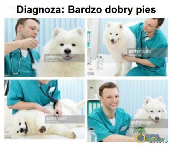Bardzo dobry pies Diagnoza: