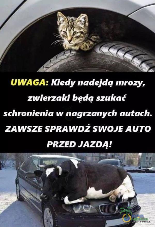 . - B 1) j f , Z _ s. UWAGA: Kiedy nadejdą mrozy, zwierzaki będą szukać schronienia w nagrzanych autach. ZAWSZE SPRAWDŹ SWOJE AUTO PRZED JAZDĄ! E