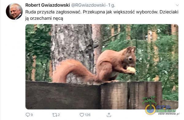 , Robert Gwiazdowski ©RGwiszdowski. 1 g. w Rucla przyszła zagłosować. Przekupna jak większość wyborców. Dzieciaki ją orzechami nęcą