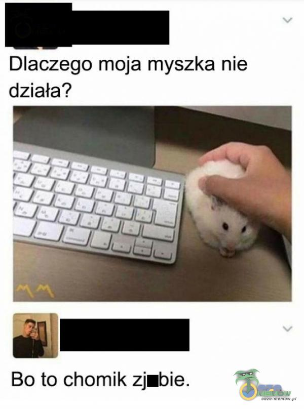 Dlaczego moja myszka nie działa? Bo to chomik zjabie.