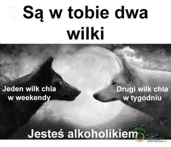 """Są w tobie dwa wilki """"JM SPOT Dnigi wilk chla WAEELCZC) DAELIM Jesteś alkohblikiem"""