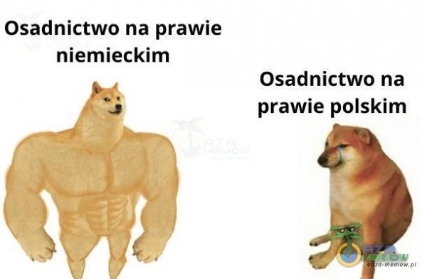 Osadnictwo na prawie niemieckim Osadnictwo na ds prawie polskim AFM 4 = i