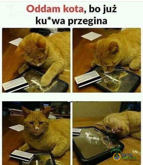 Oddam kota, bo już