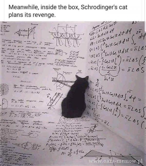 Meanwhile, inside the box, Schrodinger's cat ans iłs revenge. -710 2/71as 7 pș4;z. - •