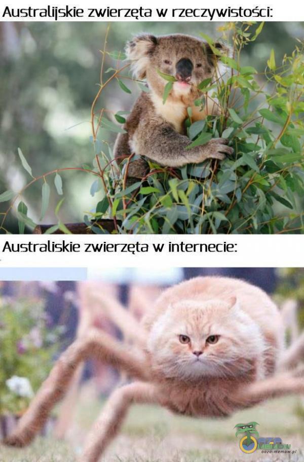 Australijskie zwierzęta w rzeczywistości: [M 7