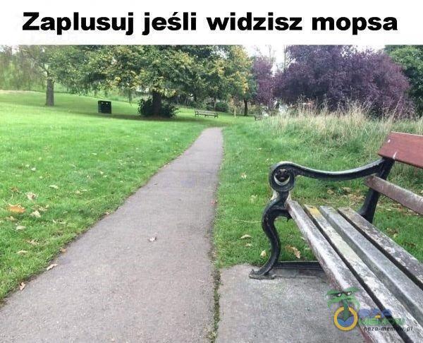 Zausuj jeśli widzisz mopsa