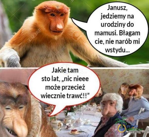 """Janusz. jedziemy na urodziny do mamusi. Błagam cie. nie narób mi sto lat, """"nic nieee może przecież . wiecznie trawć! !"""