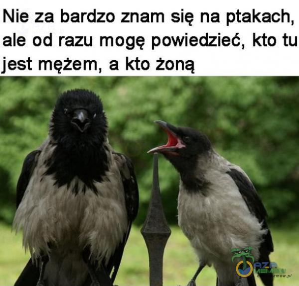 Nie za bardzo znam się na ptakach, ale od razu mogę powiedzieć, kto tu jest mężem, a kto żaną