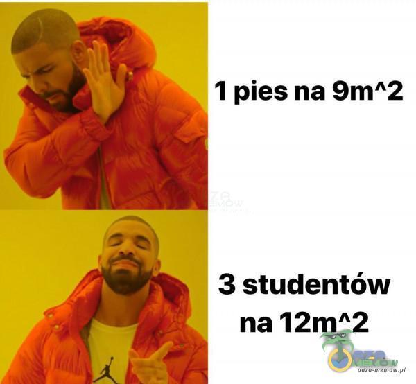 1 pies na 9m*2 3 studentów na 12m*2