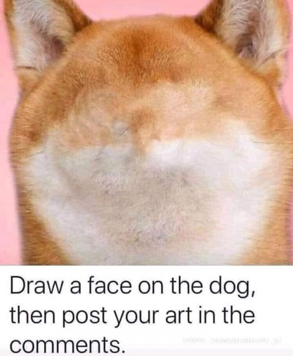 Draw a face on the dog, then post your art in the ments.