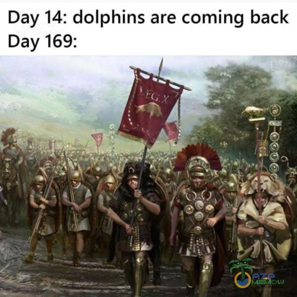 Day 14: dolphins are ing back