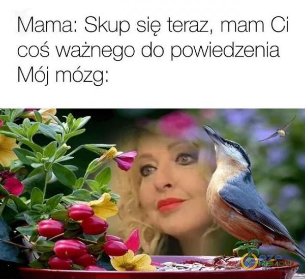 """Mama: Skup się teraz. mam Ci coś ważnego do powiedzenia Mój mózg: .i"""" ~ : ›. """", › .I """" l ? __tii-f ___; _ *Rf"""