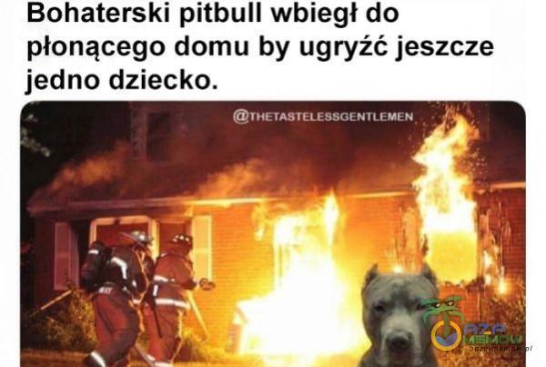 Bohaterski pitbuli wbiegł do płonącego domu by ugryźć jeszcze jedno dziecko.