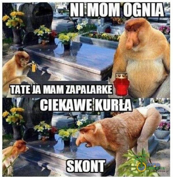 ALT nh nl TY