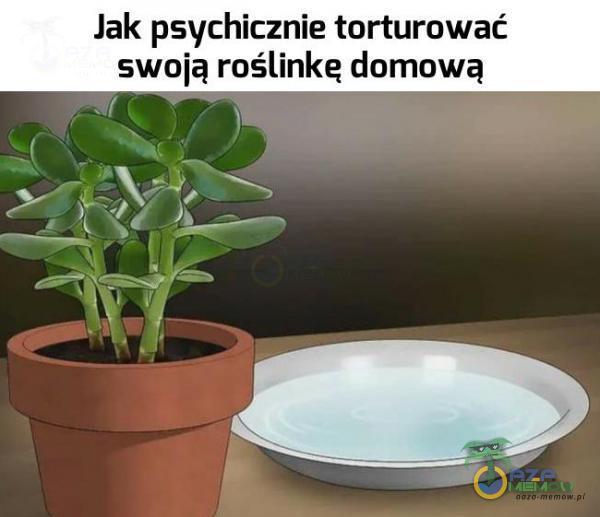 """Jak psychicznie torturować swoią roślinka domową """"iq-ni?"""