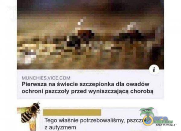 Pierwsza na świecie szczepionka dla owadów ochroni pszczoły przed wyniszczającą chorobą Tego właśnie potrzebowaliśmy, pszczół z autyzmem