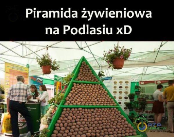 Piramida żywieniowa na Podlasiu xD