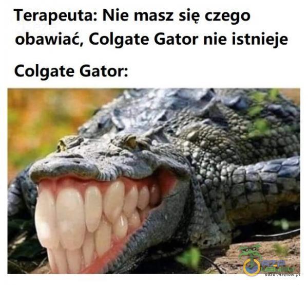 Terapeuta: Nie masz się czego obawiać, Colgate Gator nie istnieje Colgate Gator: