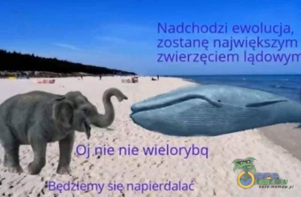 """ój nie nie wielorybq """" - BARI a ECA ICY l edziemy żłęn***erdalać L K I"""