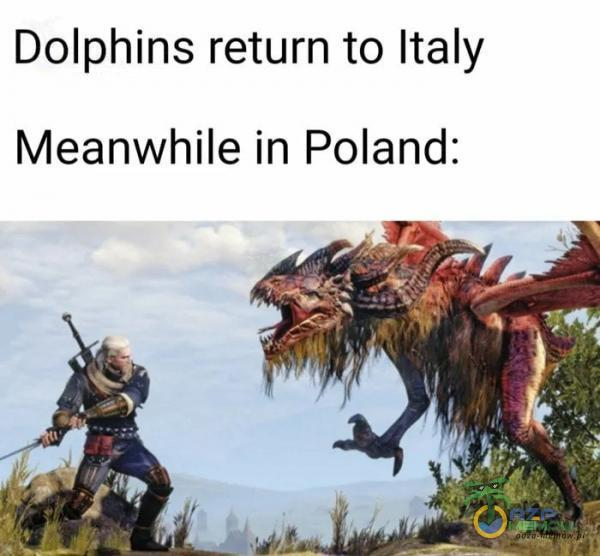 Dolphins return to Italy Meanwhile in Poland:
