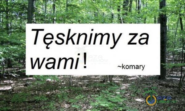 Ę Tesknim = za Mi i. = wami: i! =komary