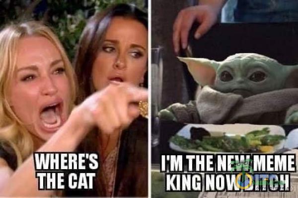 WHERE S CAT I M THE
