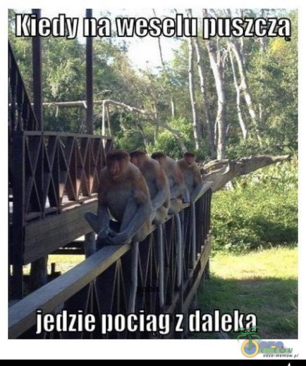•il(ierlll Iła weselil Iłușżcza jedzie Iłociag z (lalel(a