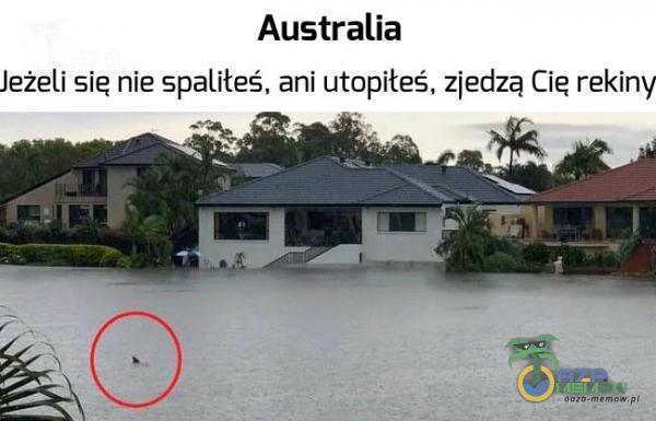 Australia Jeżeli się nie spaliłeś. ani utopiłeś. zjedzą Cię rekiny