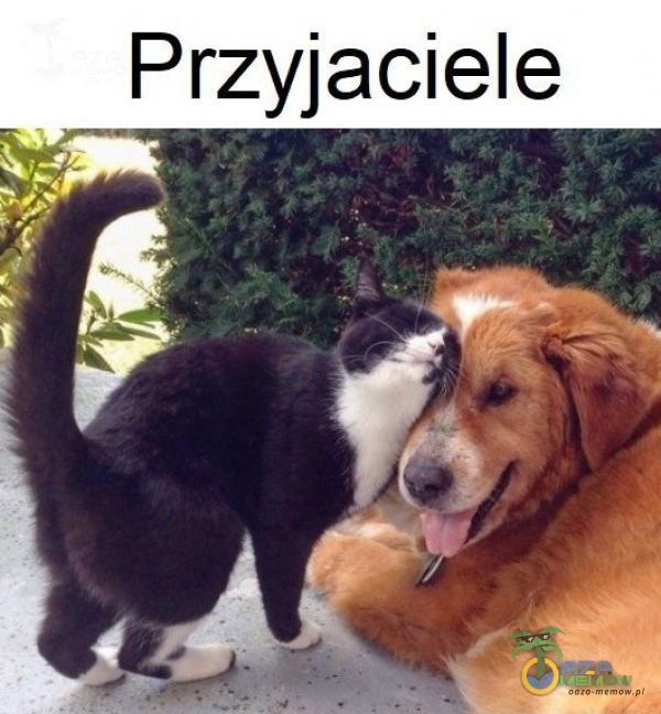 _ Przyjaciele Se > Ź U 4 ć SE