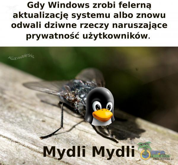 Gdy Windows zrobi felerną aktualizację systemu albo znowu odwali dziwne rzeczy naruszające prywatność użytkowników. Alice Mgr)-E dli Mydli
