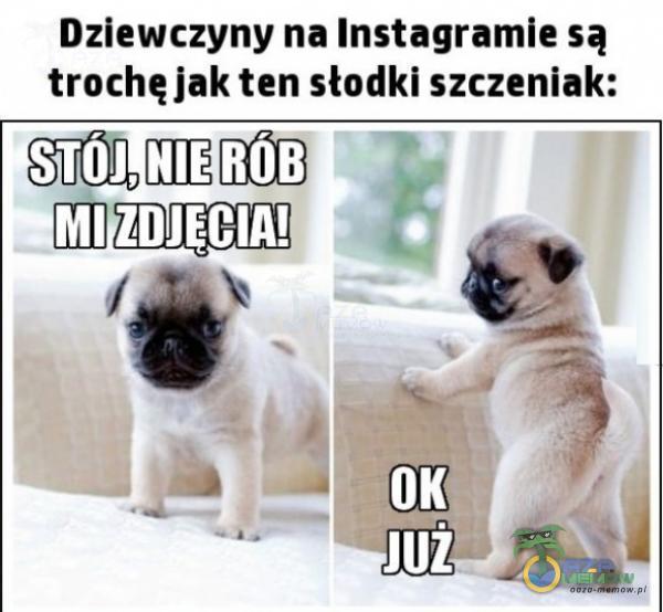 Dziewczyny na Instagramie są trochę jak ten słodki szczeniak: SALARAÓ 7 MIZDJECIALNO ZĄ Ma; k