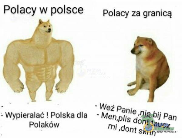 Polacy w polsce =wypiecalać Pojskadia + M Polaków. Polacy za granicą