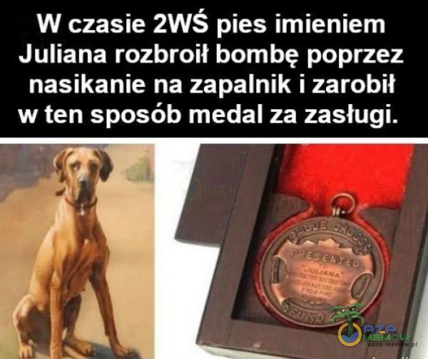 W czasie 2WŚ pies imieniem Juliana rozbroił bombę poprzez nasikanie na zapalnik i zarobił w ten sposób medal za zasługi.