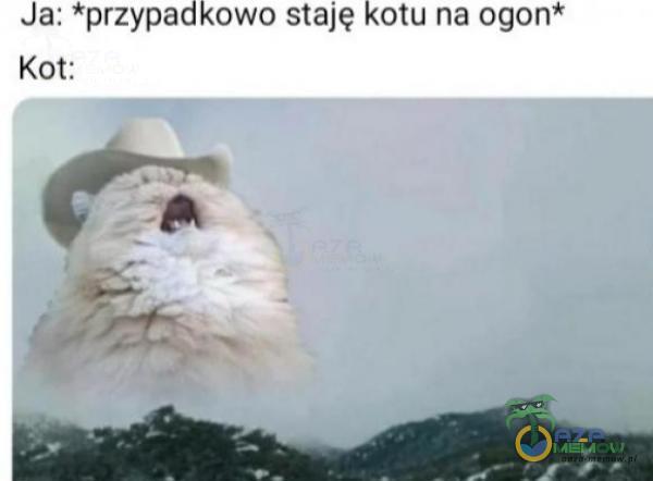 Ja: *pvzypadkowo staję kotu na Ogon Km: