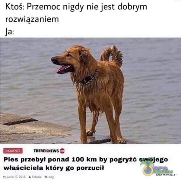 Ktoś: Przemoc nigdy nie jest dobrym rozwiązaniem Pies przebył ponad 100 km hy pogryźć swojego właściciela który go porzucił = femlTLE Pam © Jogi
