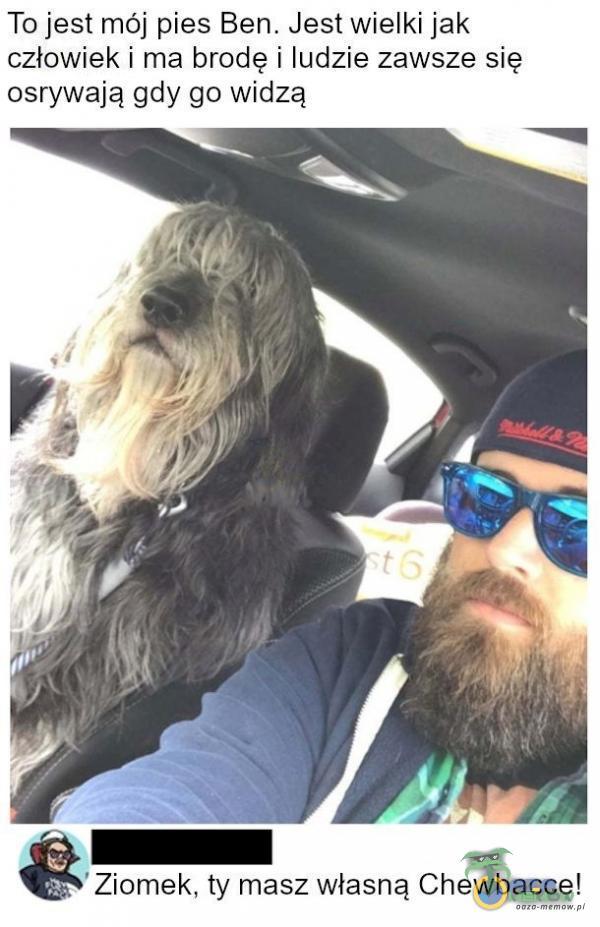 To jest mój pies Ben. Jestwielki jak człowiek i ma brodę i ludzie zawsze się osrywają gdy go widzą AIZ Ziomek. ty masz własną Chewbacce!